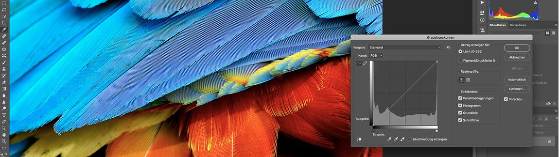 Bilddetailvergrößerung eines farbigen Gefieders mit Photoshop-Werkzeugs zur Bildbearbeitung