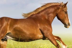 Pferdefotografie: Lassen Sie sich auf die Freiheit liebenden Tiere ein und finden Sie zauberhafte Motive!